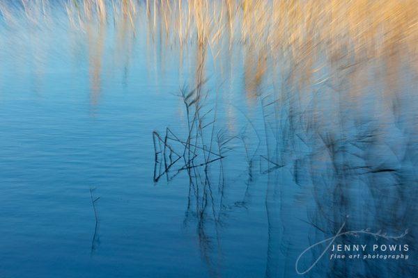 River Reeds Fine Art