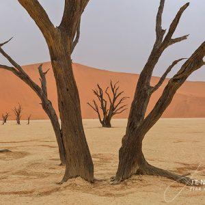 Namibia Desert Bare Trees