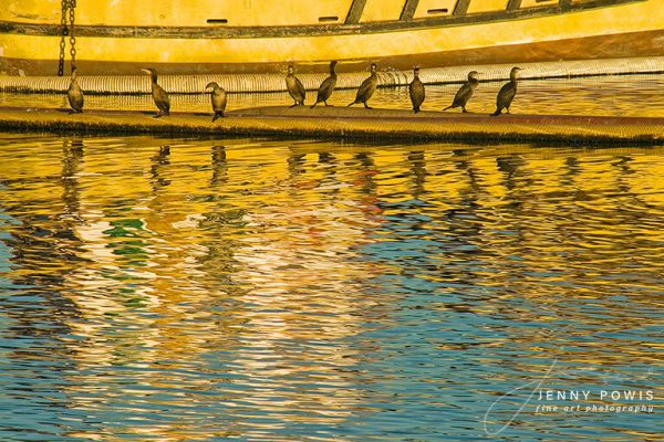 Seabirds reflections